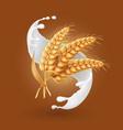 wheat ears or barley cereals in milk splash vector image