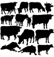Cow Silhouettes vector image