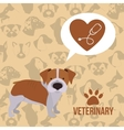 vet clinic design vector image