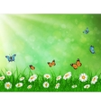 daisy background summer design vector image