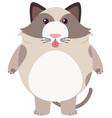 fat cat on white background vector image