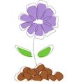 Cornflower drawing vector image