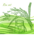 rise set hand drawn rise plant and grain on vector image