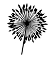 silhouette dandelion with stem and pistil closeup vector image