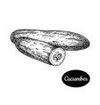hand drawn sketch style cucumber vector image