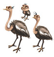 maturation stages of ostrich stages of growth vector image