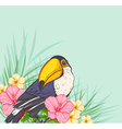 Toucan and flowers vector image