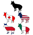 Coyote flags vector image