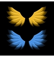 Fiery Golden and Blue Wings on Black Background vector image