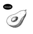 hand drawn sketch style fresh avocado vector image