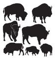 Silhouettes buffalo vector image