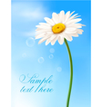 beautiful daisy card vector image