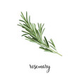 rosemary branch vector image