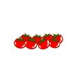 tomato vector image