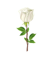 White rose isolated on white vector image vector image
