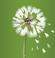 Dandelion blossom flower vector image vector image