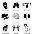 Collection of internal organ vector image