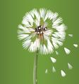 Dandelion blossom flower vector image