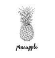 pineapple sketch is a vintage drawing vector image