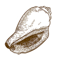 engraving cone shell vector image
