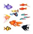 Set of aquarium fish Realistic and fairytale vector image