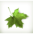 Maple leaf green vector image