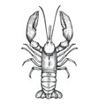 lobster hand drawn isolated icon vector image