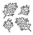 parsley herb green leaves food and seasonings vector image