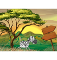 A zebra running following the wooden arrowboards vector image