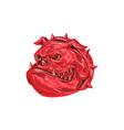 Angry Bulldog Head Drawing vector image