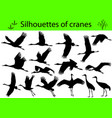 Silhouettes of cranes vector image