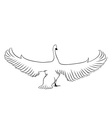 swan isolated on the white vector image vector image