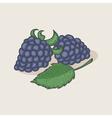 Doodle blackberries and leaf vector image