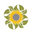 flower of sunflower vector image vector image