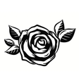 beautiful roses flower vector image vector image