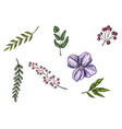 realistic flowers and leaves hand drawn colorful vector image