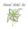 natural herbal tea vector image
