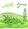rosemary oil set hand drawn rosemary plant on vector image