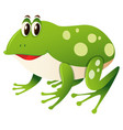 happy frog on white background vector image