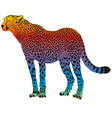 cheetah - abstract rainbow vector image vector image