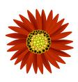 Elegant Perfect Orange Sunflower on White vector image