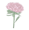 aster flower isolated on white background vector image
