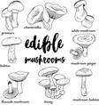 doodle edible mushrooms vector image
