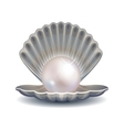 Pearl in shell for fashion vector image