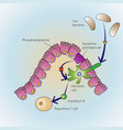 Dying epithelial cells vector image