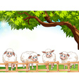 Four sheeps vector image