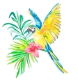 Tropical birds isolated on white background vector image