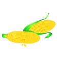 corn ears vector image