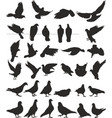 pigeon silhouettes bird vector image