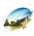Largemouth bass catching bite vector image